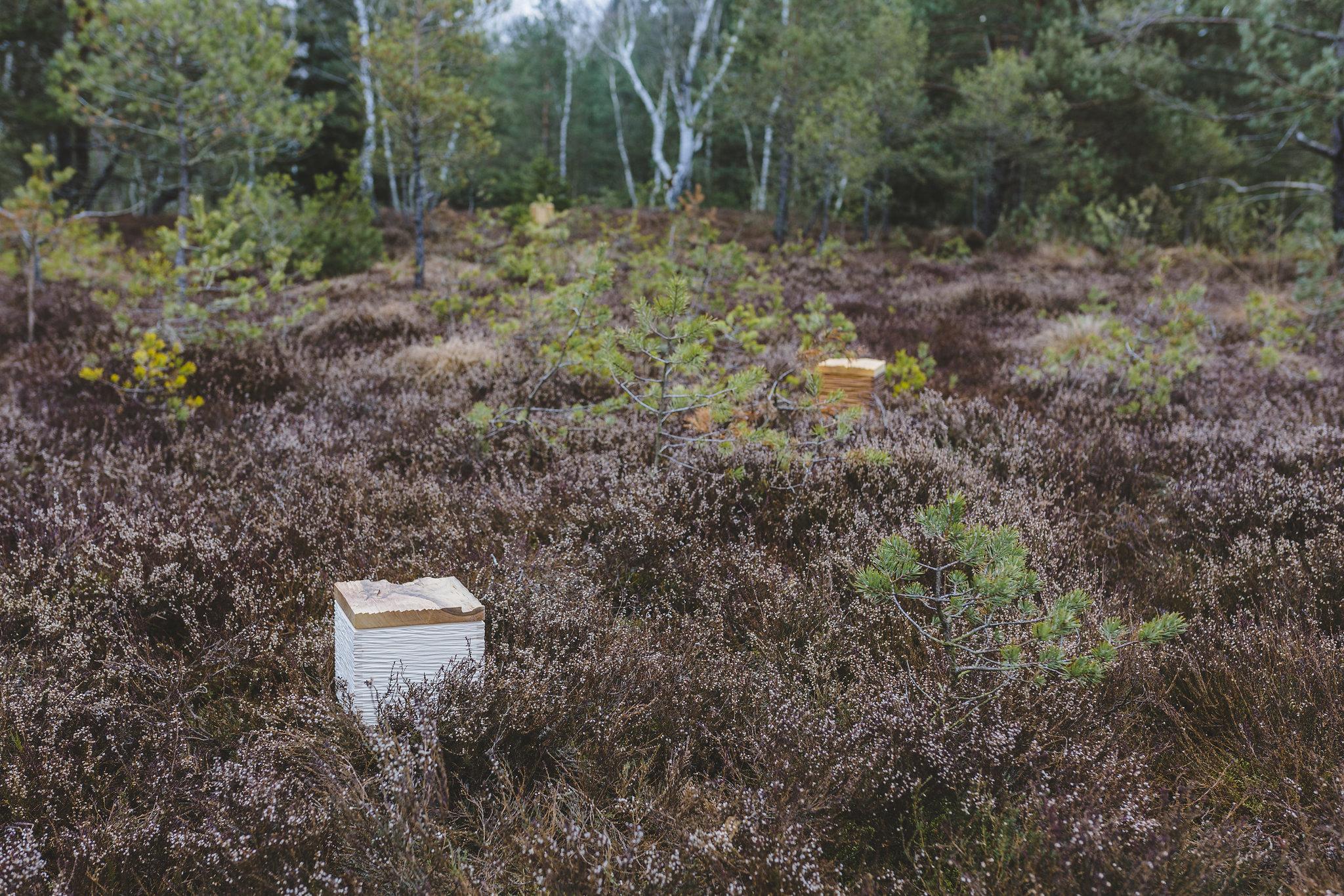 Holzurne im Wald